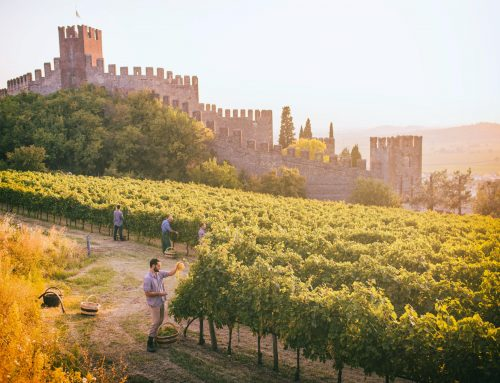 The vine-clad hills of Soave: a new IUAV research project