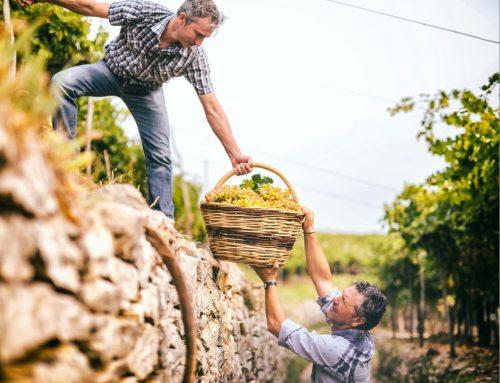 Con Soilution System il Soave preserva le sue colline Patrimonio Agricolo Globale.