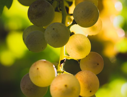 The science behind terroir: Soave launches a new research project