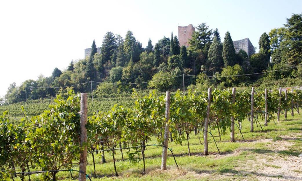 Colli Vicentini Vitevis - Drink Soave